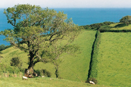 Holiday cottages on Special offer in Devon
