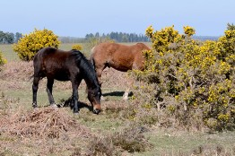 Hampshire and the New Forest Holidays