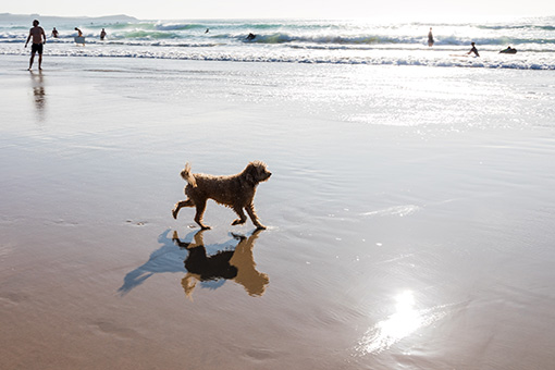 Pet Friendly holiday cottages